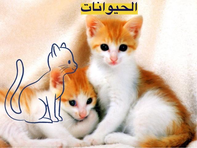 لعبه القط by Nora alharbi