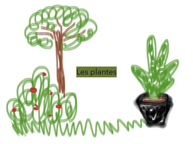 LES PLANTES by Cris Cruz