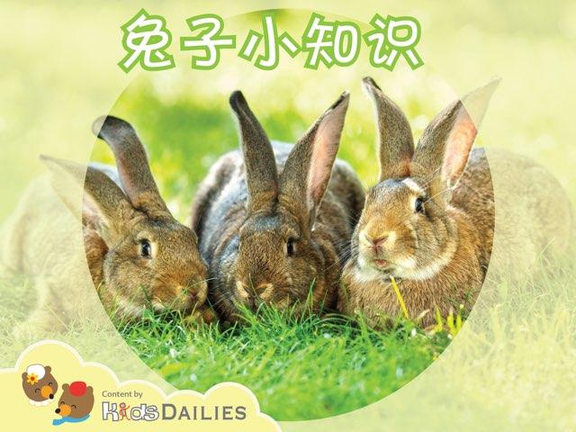 一起来学习关于兔子的知识吧! by Kids Dailies