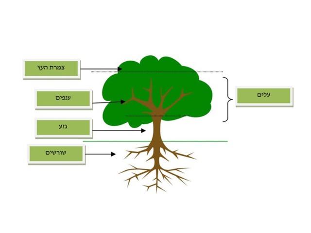 חלקי העץ by TinyTap creator