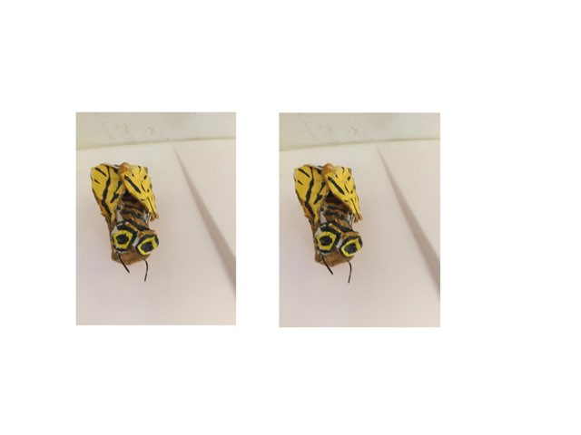 ספירת דבורים by TinyTap creator