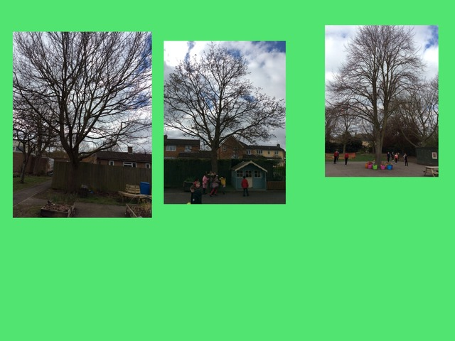 Foundation Trees by Fernvale  Primary Primary