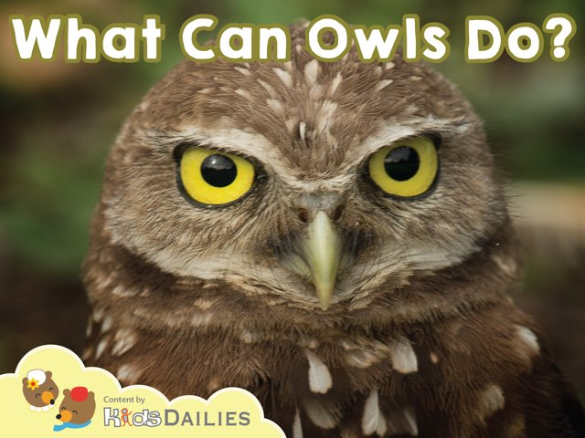 What Can Owls Do? by Kids Dailies
