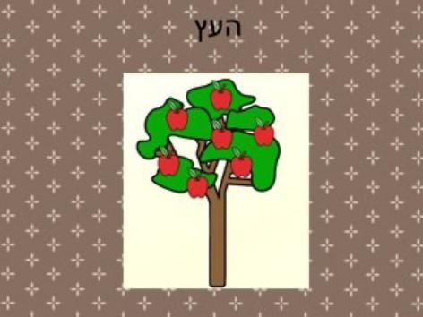סיפור כיתתי העץ(2) by Efrat Ilan