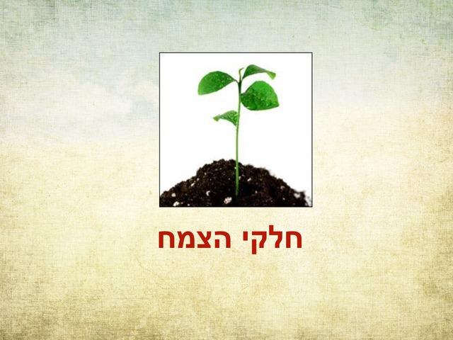 חלקי הצמח by Avigail Provisor