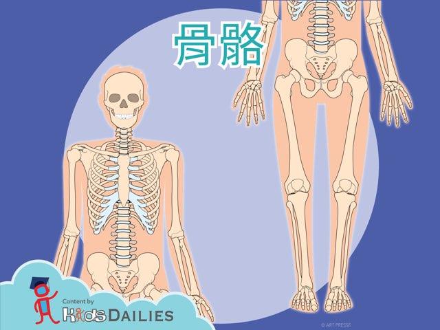 認識骨骼 by Kids Dailies