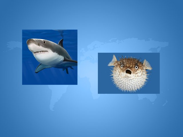 Puffer Fish and Shark by Nora Brown