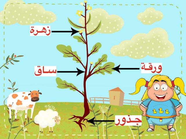 أجزاء النبات by Fatma Al-Ameer