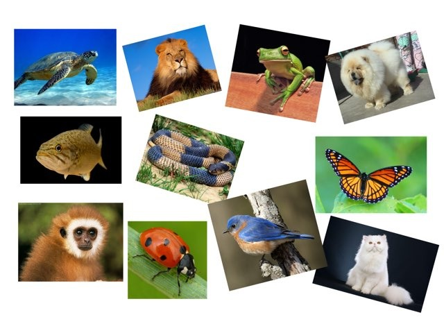 Animals by Pablo Fuentes