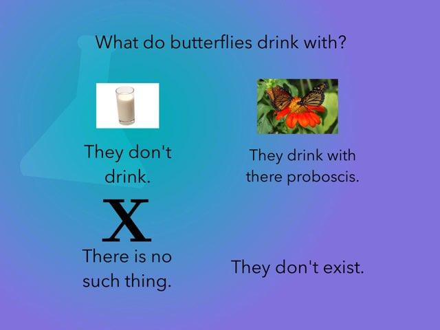 Butterfly Organism 10 Questions  by Jennifer Borosh