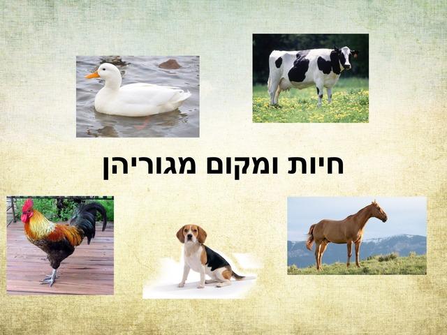 חיות ומקום מגוריהן by Shiran Revivo
