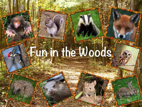 Fun In The Woods by Catherine Davies