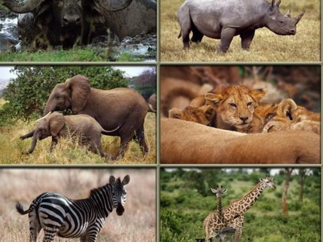 AFRICA'S WILD ANIMALS by Marie-Laure Varcoe