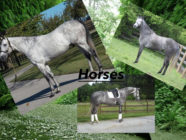Horse Facts by Tamara Mitchell