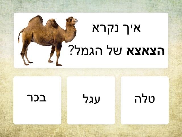יונקים וצאצאים 2 by Hadar Itzhaki