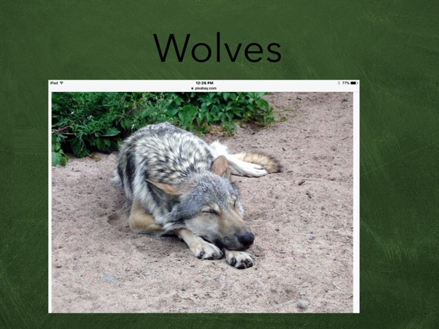 Wolves By Dalton by Hulstrom 1st Grade