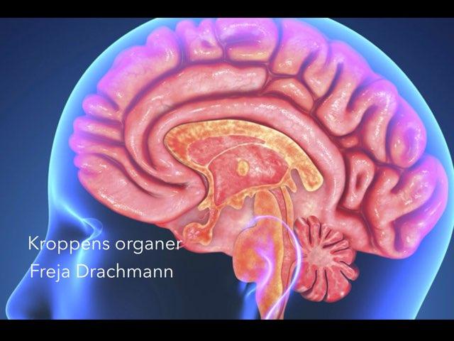 Drachmann Organer by Elev Skibet