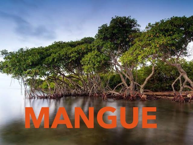 Animais Do Mangue by Coordenação Tecnologias Educacionais
