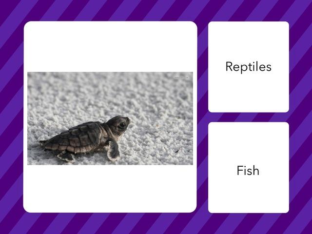BA 25 Turtle Quiz - Mel And Rafa by Bilingual Adventure
