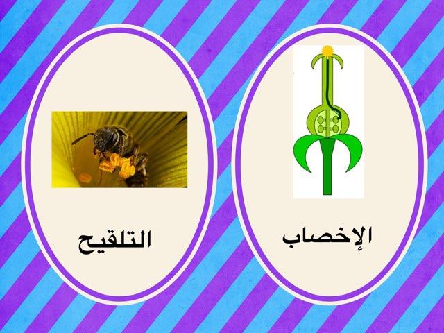 الإخصاب والتلقيح by Fatma Al-Ameer