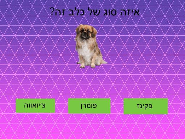 כלבים לין by בית ספר קישון