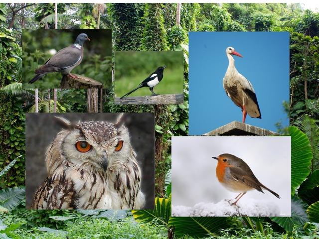 Vogelquiz by Roel Van de Pol