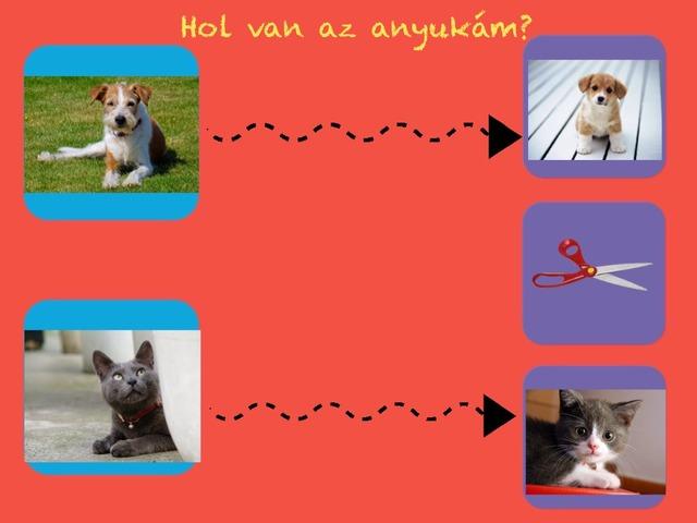 Állatok by Evelin Pölös
