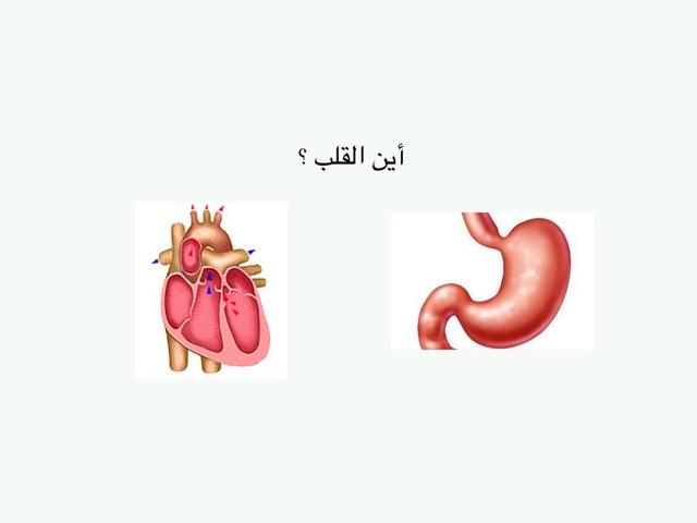 جسم الإنسان by abdulmajeed alzhrani