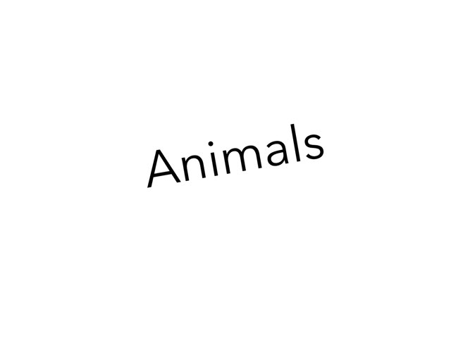 Animals by Montse Solé