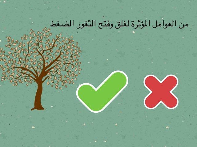 احياء ١١ by Shaimaa Mohammed