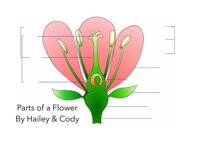 Hailey & Cody by Ashley Shaw