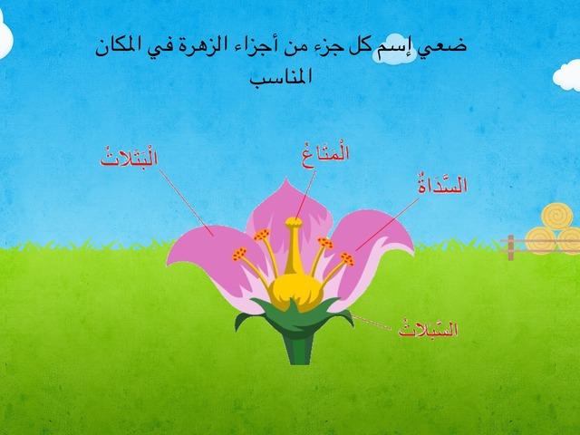 أجزاء الزهرة by Eman Alawadhi