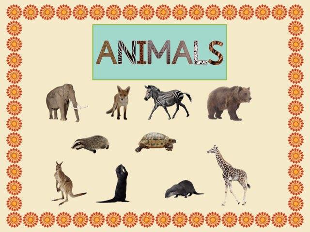 Animals #2 by Carol Smith