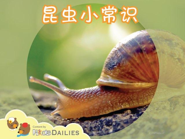 昆虫小常识 by Kids Dailies