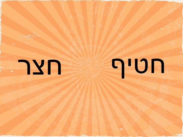 זיהוי מילה חצר  by Maayan Levy