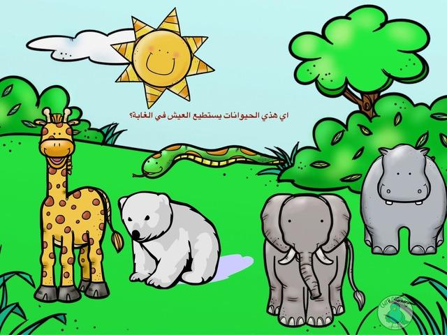 حيوانات الغابة by Learn more