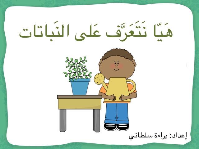 نباتات بلادي by Baraah Sultany