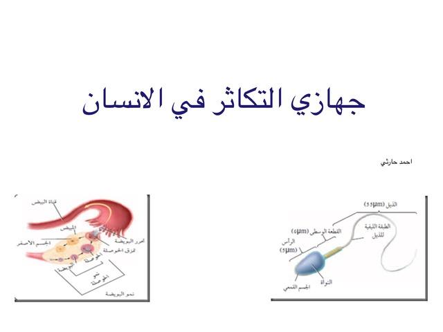 جهازي التكاثر في الانسان by احمد كريري