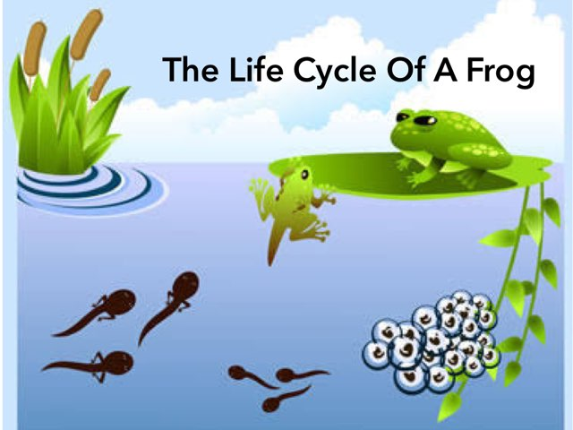 The Life Cycle Of A Frog by Kym Broad