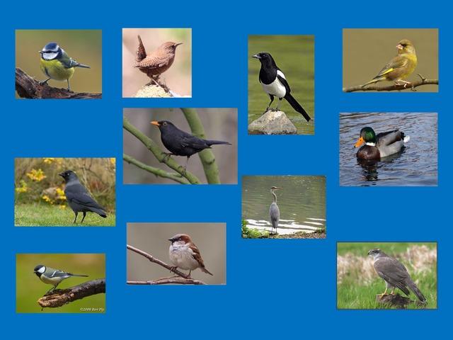 Vogels by Petra van der Pol
