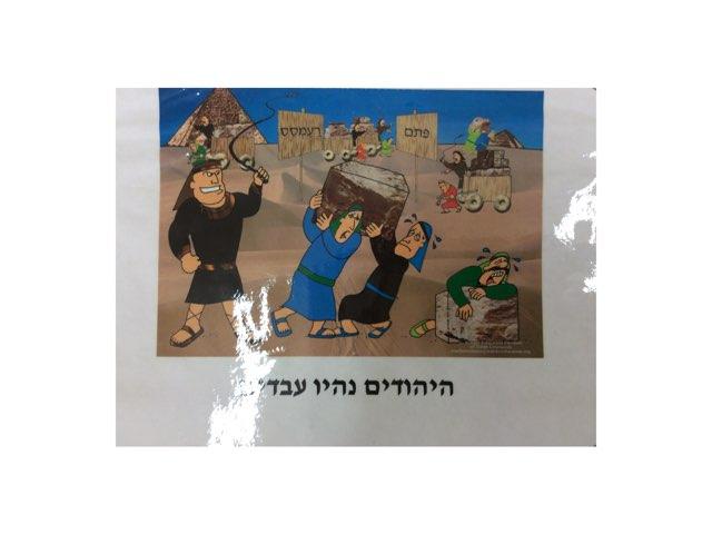 שאלות פסח בית מצודות by Eliezer Adler