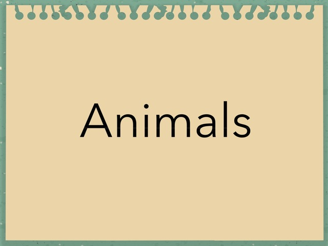 Animals  by Abbey Pickel