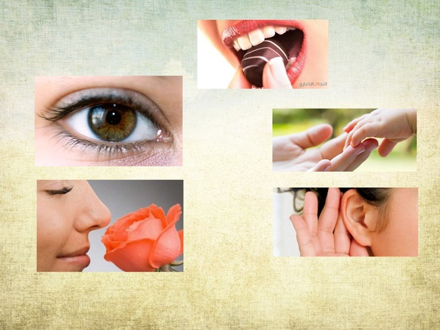 5 Senses by Doaa Abed