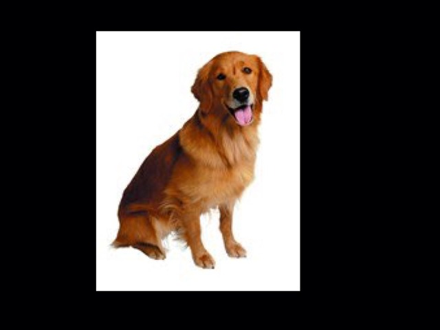 Dog by Sheila Manning