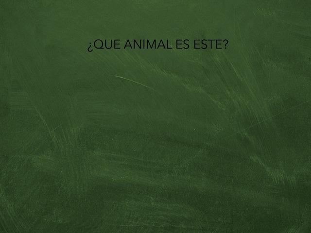 Animals  by Hugo Román