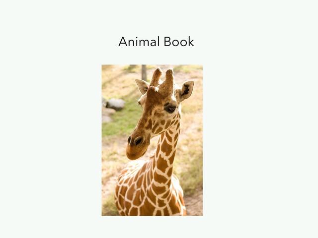 Animals by MaryAnne Roberto