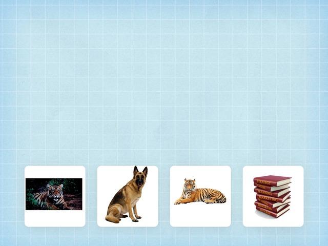 Animal Quiz by Li Ting
