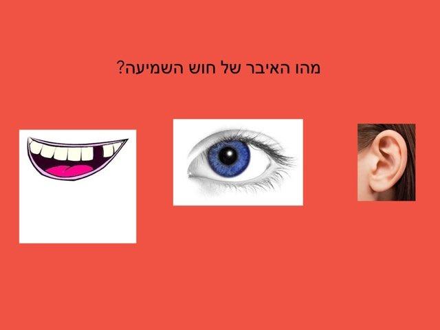 חידון חוש השמיעה by אדווה תנעמי