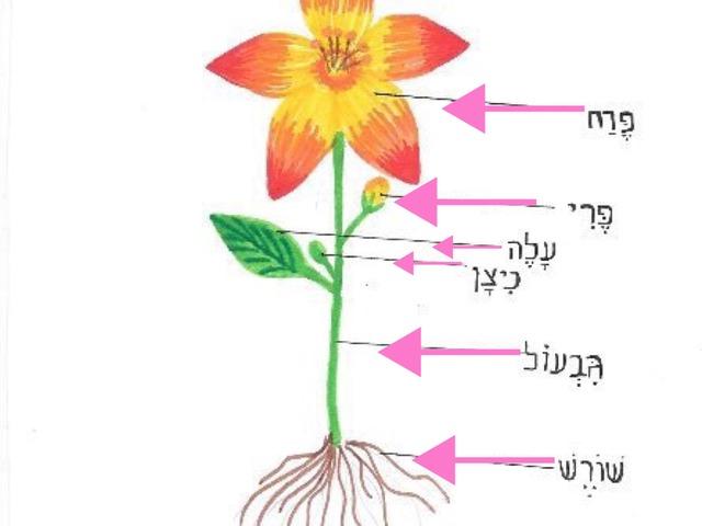 הדר הריאל חלקי הפרח by הדר הריאל