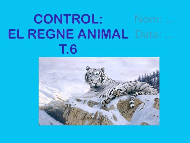 Control T.6 by Eva Lopez